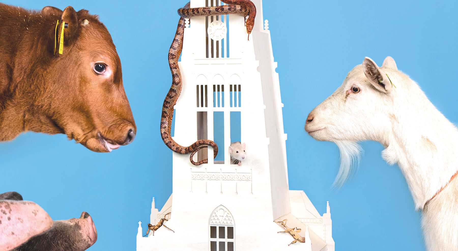 Natuurcentrum Arnhem Gelderland dieren Animals DDD